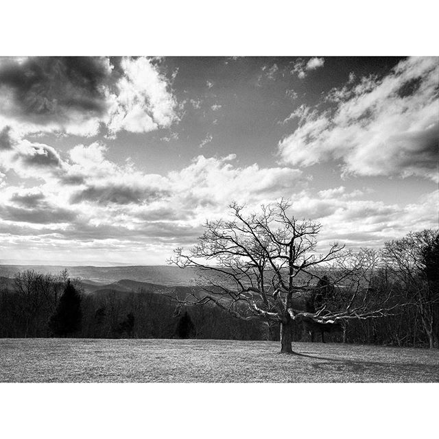 Solo tree #ricohgr #skylinedrive #monoart_ #visualsofadventure #exploretocreate #virginia #latergram