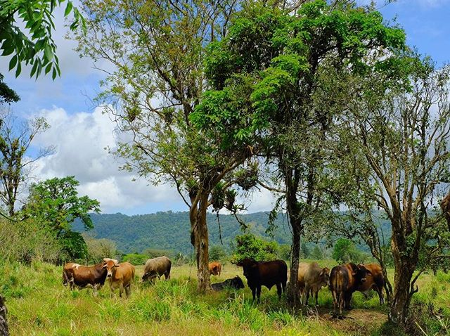 Roadside view while driving through #costarica #guanacaste